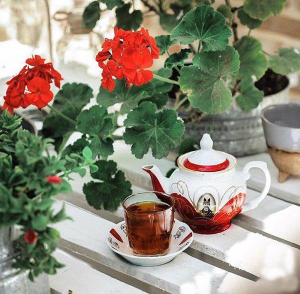فروش قوری گل قرمز